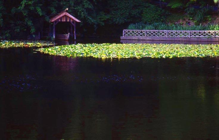 Ryoan-ji, Lotus-Teich